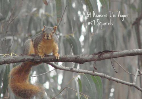 Squirrel Moment