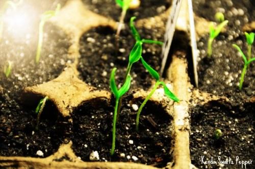 day-18_seedlings