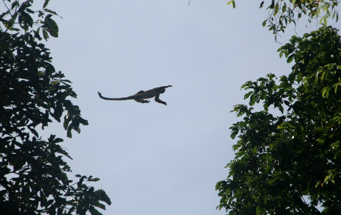 jungle monkey Peruvian Amazon. How to get to Iquitos