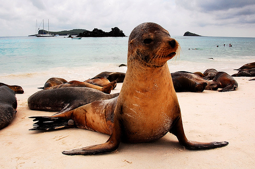 Galapagos island sea lion-travel bucket list