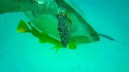 Schildkröte Fische