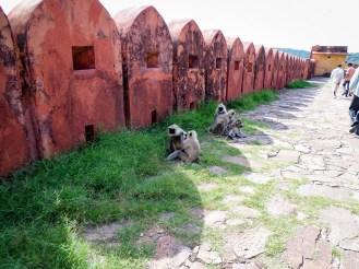 Affen Jaigarh Fort Jaipur