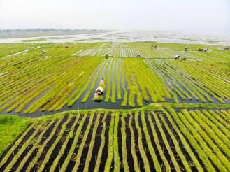 Floating Garden Inle Lake Drone Flight