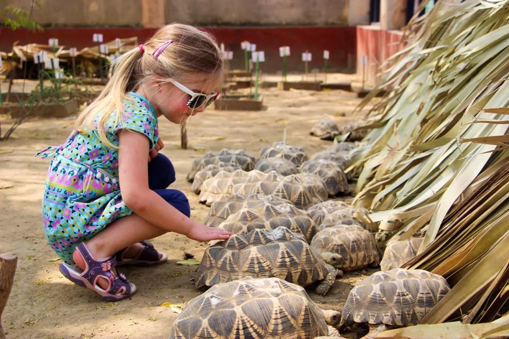 Burmesische Sternschildkröten Natogyi