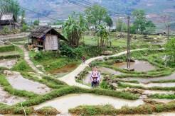 Reisfelder in Lao Chai