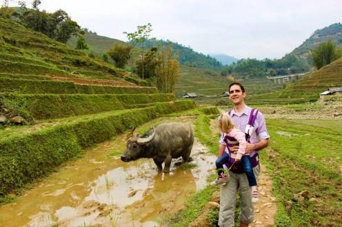 Wasserbüffel auf der Reisterrasse in Sapa