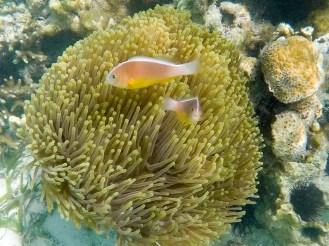Korallenriff Matemwe Beach Sansibar