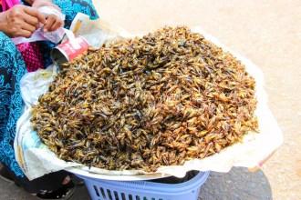 Gegrillte Heuschrecken Myanmar