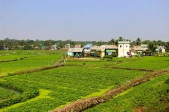 Plantage Yangon