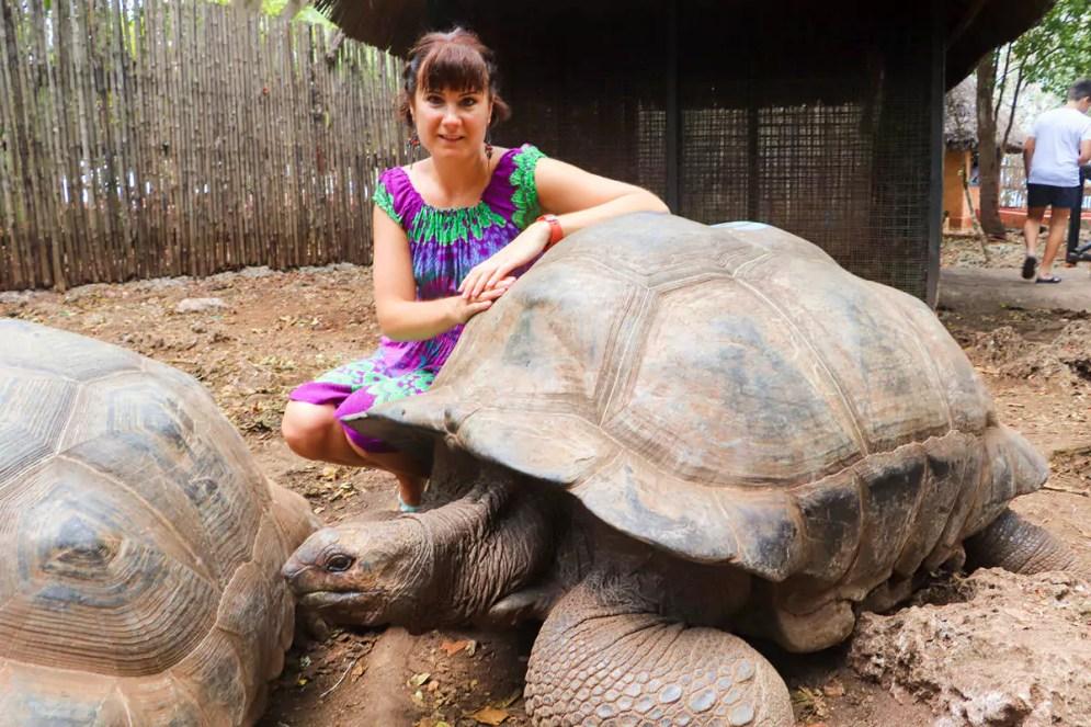 Schildkröten Gefängnisinsel Sansibar