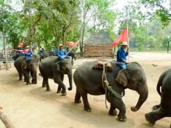 Elefanten Show im Thailand