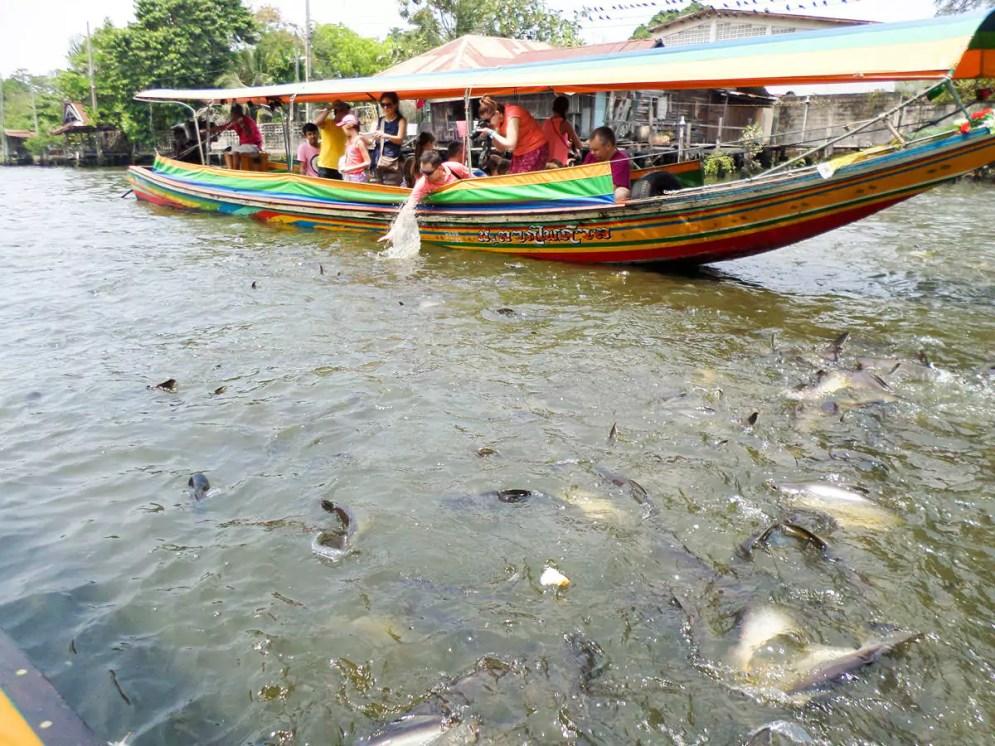 Fische füttern vom Longtailboot