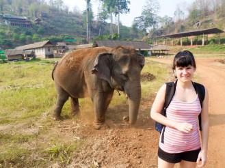 Ran Tong Elephant Centre Chiang Mai
