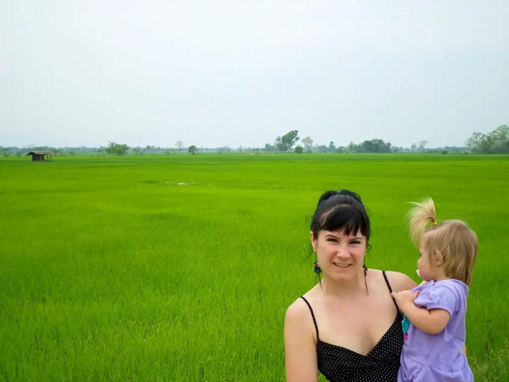 Reisfeld im Norden Thailand