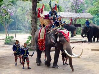 Kriegselefant im Thai Elephant Conservation Center