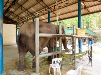 Tierklinik Thai Elephant Conservation Center