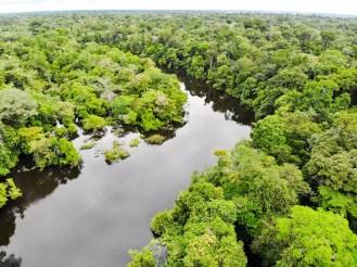 Amazonas Dschungel in Peru Luftaufnahme