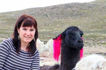 Schwarzes Lama im Salinas y Aguada Blanca National Reserve