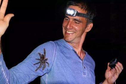 Tarantula Amazonas Dschungel Peru