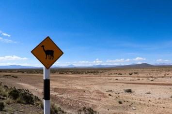 Vorsicht Vicuña Straßenschild in Peru