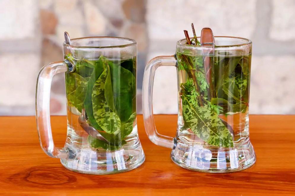 Coca Tee und Inka Tee