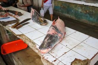 Große Fische auf dem Belén Market