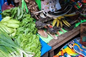 Kaiman Schädel Belén Market