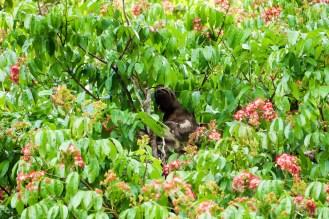 Faultier auf dem Baum