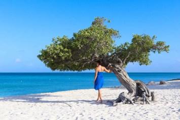 Divi-Divi Baum auf dem Eagle Beach