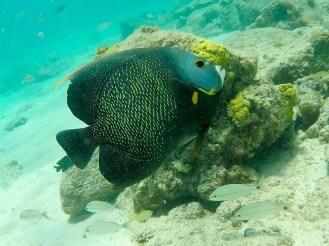 Fisch Boca Catalina