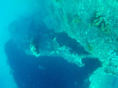 Schildkröte am SS Antilla Wrack