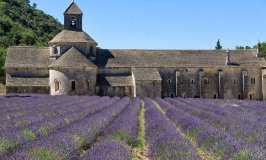 Abbaye de Sénanque and its Stunning Lavender Fields