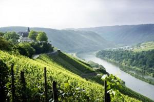 Mosel Wine Region