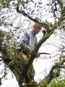 A brave tree climber