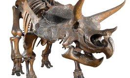 Dinosaurs at the Natural History Museum – London
