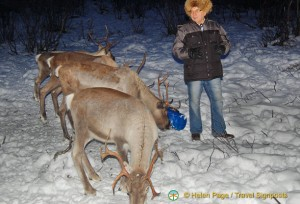 Reindeer Park and Sami Guine