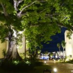 300-year-old-cotton-tree - Tripadvisor TravelSmart VIP