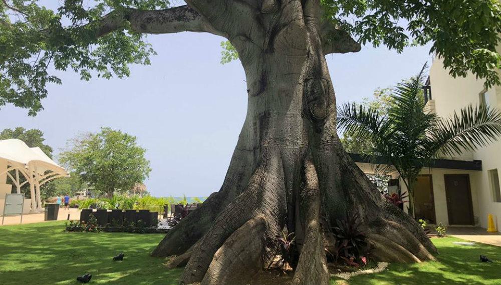Silk Cotton Tree Royalton Negril TravelSmart VIP