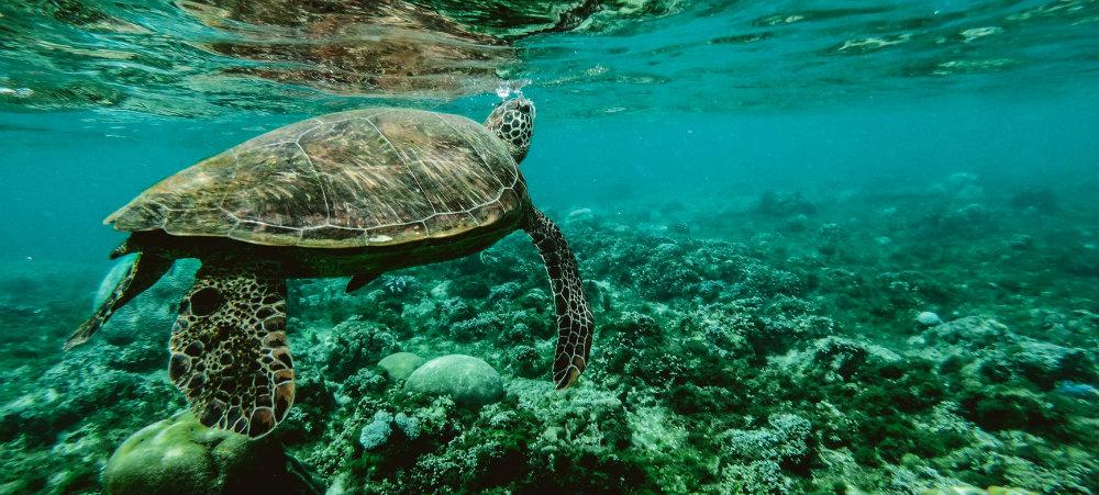 Sustainability Royalton - Marine Life - TravelSmart VIP