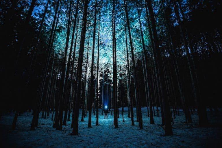 Person im Wald mit Taschenlampe