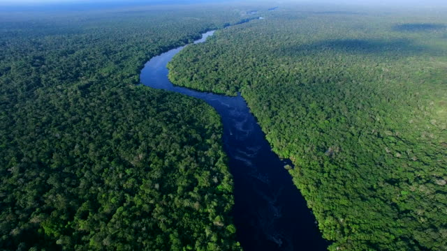 Interesting-Facts-of-The-Earth-Amazon-Rainforest