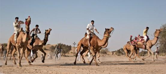 International Camel Derby Festival