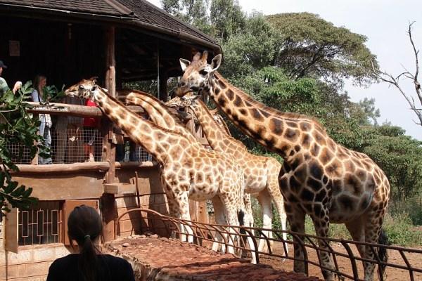 giraffecenter, Nairobi