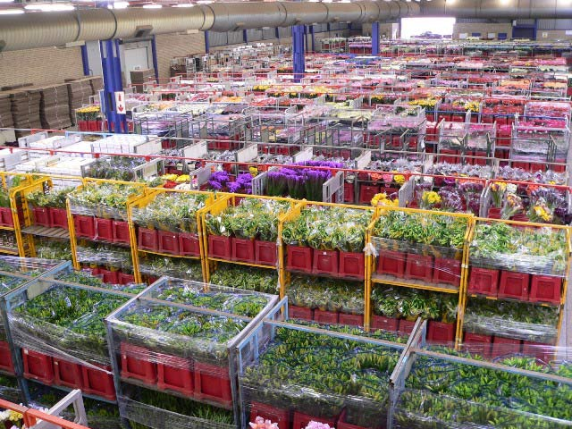 Multiflora Flower Market