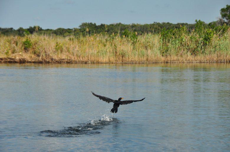 Kosi Bay Iga Motylska fish eagle