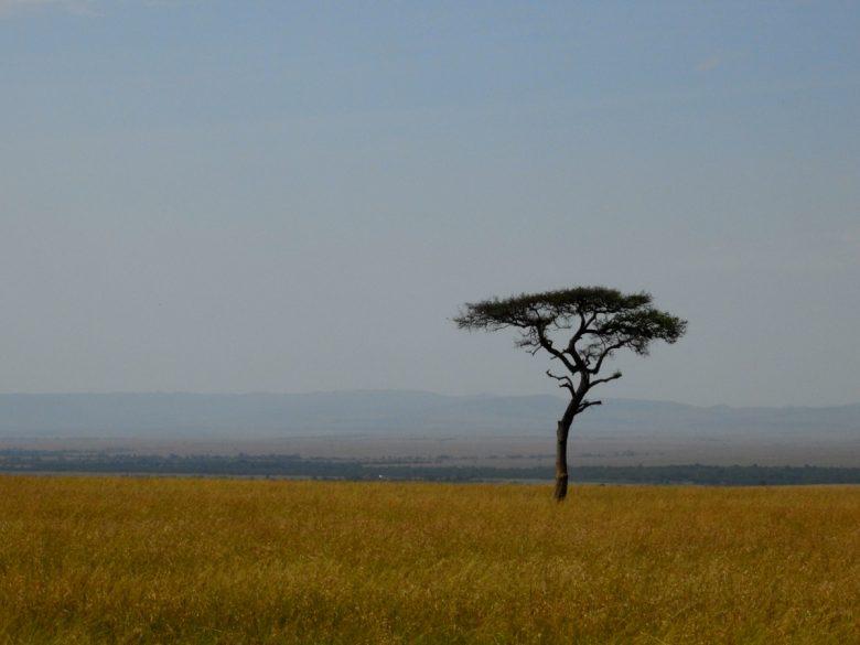 Kenya grasslands