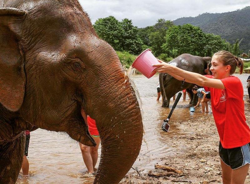 study abroad elephants