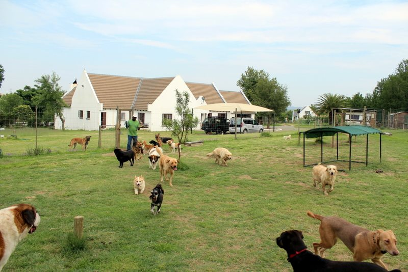 pet travel farm hotel