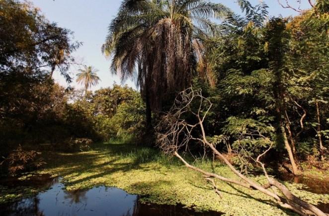Abuko_Nature_Reserve