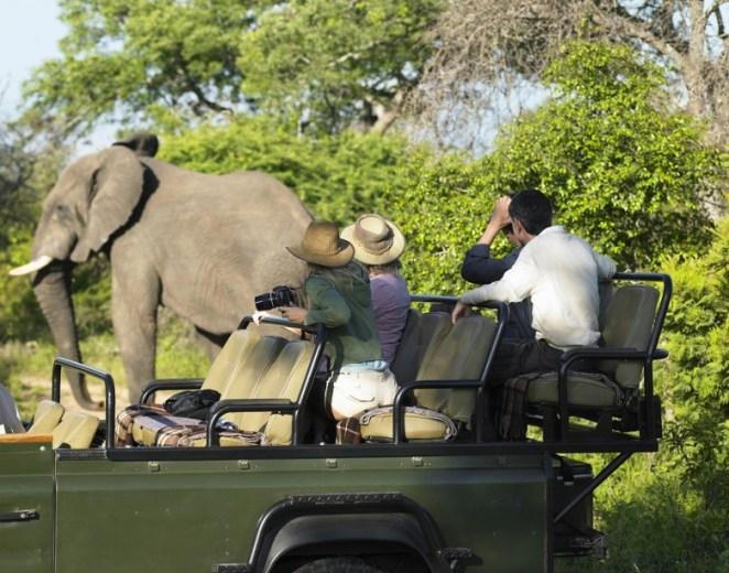 Africa-Safari-780x613